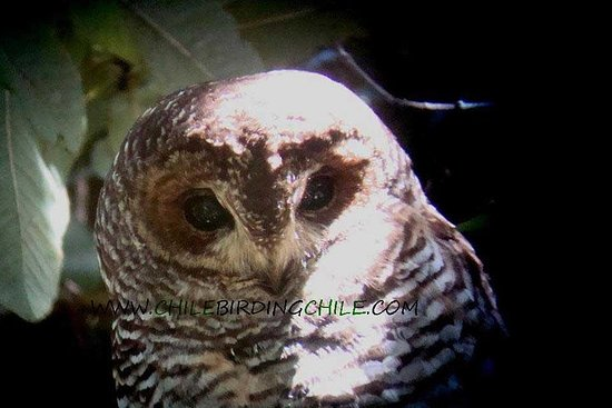 Observation des oiseaux Aysen Patagonia