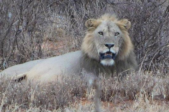 7 dager Bigfive Safari - NAIROBI