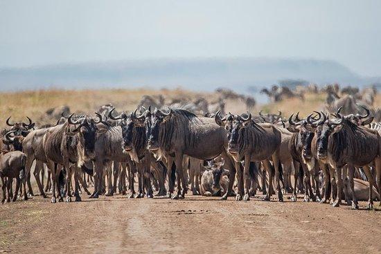Foto 7 Days / 6 Nights Ndutu Wildebeest Migration Private Safari
