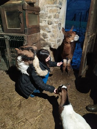 Cortes, España: Feeding animals in the farm