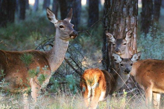 Donana National Park à deux jours de...