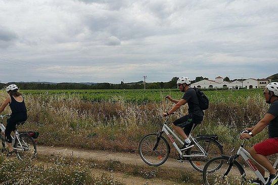 Recorrido En Bicicleta Por Los Viñedos (visita Sostenible)
