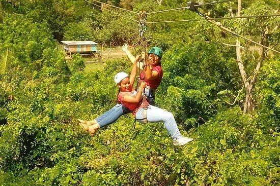 Zipline Plus Monkey and Sloth...