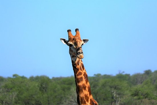 23-Day Kruger, Vic Falls and Zanzibar Adventure Accommodated Tour...