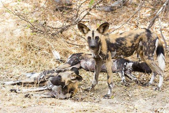 3 Days - Budget Safari To Selous Resmi