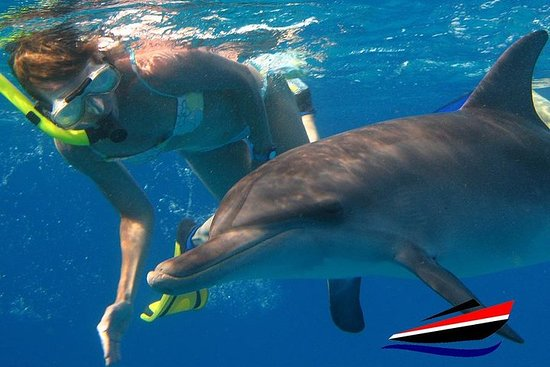 4 Hours Snorkeling With Dolphins Trip...