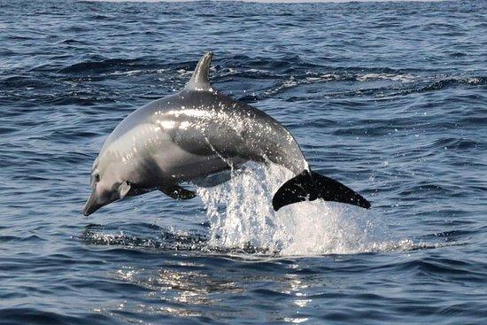 Observacion En Delfines, tortugas Y...