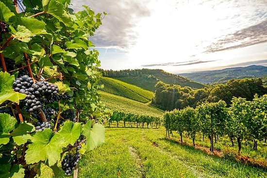 1-dagers 'Classic Luxury Willamette Valley Wine Tour Experience'