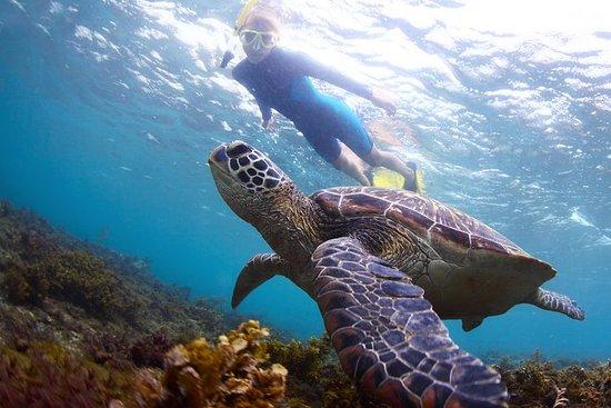 Haleiwa Turtle Tour Eco Adventure
