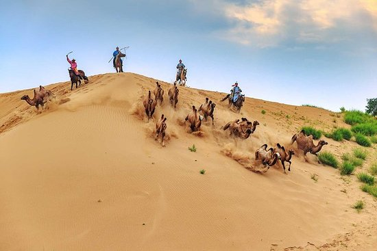Circuit de 8 jours: désert de Gobi et...