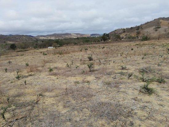 Macro lote en la parroquia Machalilla- Puerto López 🧐 Area: 28.499 metros cuadrados 💲 Valor: 8 dólares por metro cuadrado 🥳 NEGOCIABLES 🥳 📞 Fernando Castro 0990223094 💼 Bienes Raíces