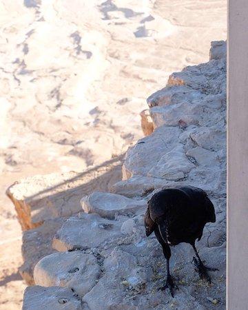 Masada, Ein Gedi and The Dead Sea from Jerusalem Resmi