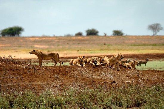 2 DAGEN TSAVO EAST SAFARI AANBIEDING ...