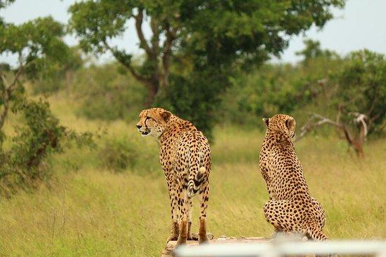 13-dagers Kruger Swaziland og Drakensberg Adventure Camping Tour fra...