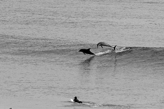Noche en Tweed Coast Camping y escapada de surf de la Costa Dorada
