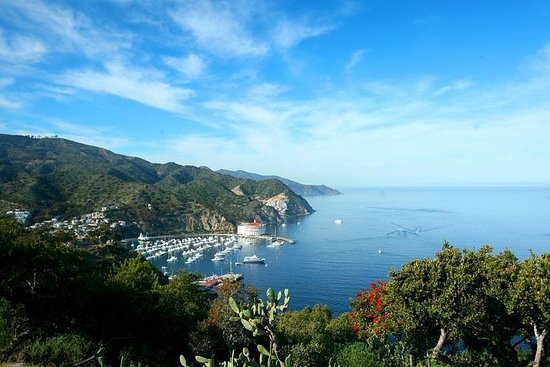 Catalina Island Day Trip from Anaheim...