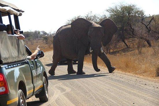 Safari clásico del Parque Nacional...
