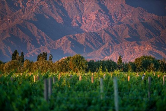 Cafayate Wine Route Day Tour fra Salta