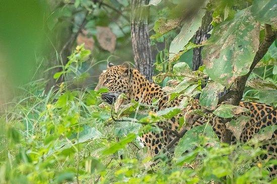 3N-4D Safari Tour to the Panna Tiger Reserve with a Video Reel (Safari Only) – fotografia