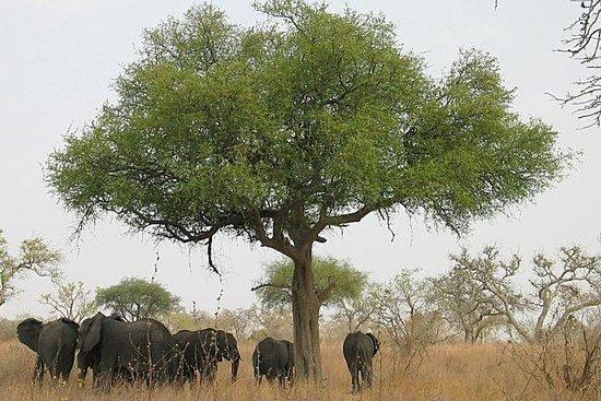 Le parc national de Lobéké