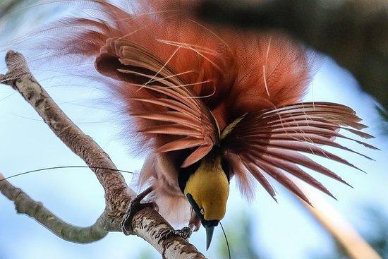 Birding & Cultural Tour - Port...