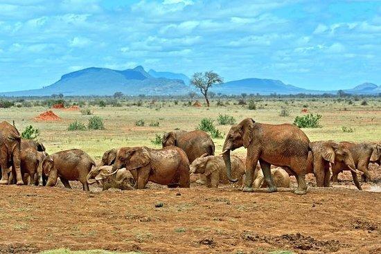 来自蒙巴萨的3天Tsavo私人野生动物园