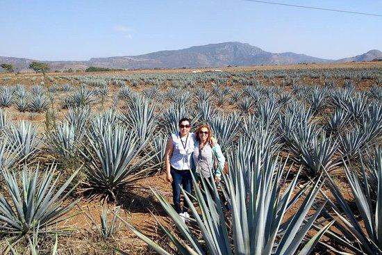 Tour della tequila, Ruta del Tequila