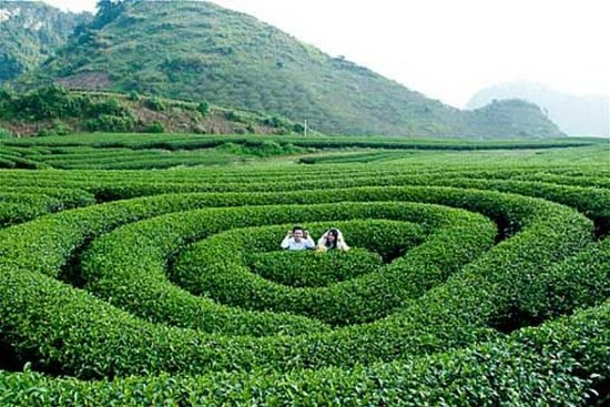 2 Day Moc Chau discover with flower blossom