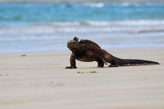 5天全包式加拉帕戈斯群岛游 - 旅游类照片