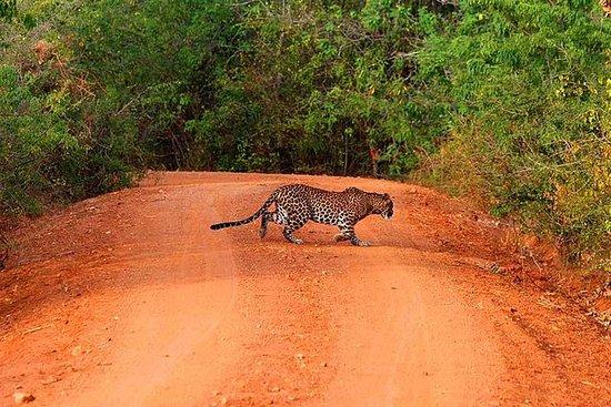 Excursion d'une journée à Yala Safari...