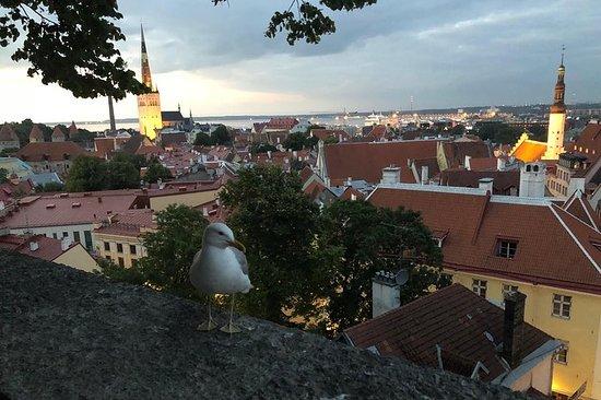 7 Days Small Group Tour: Estonia...