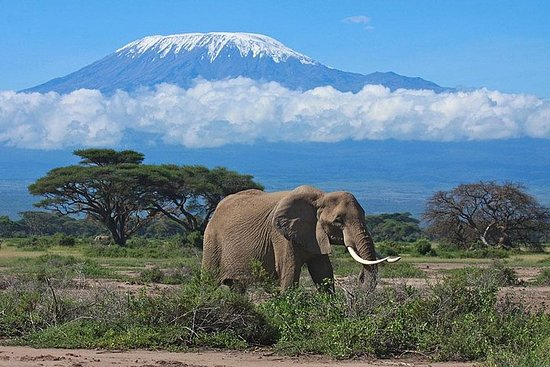 7-Day Maasai Mara, Lake Nakuru, Lake...