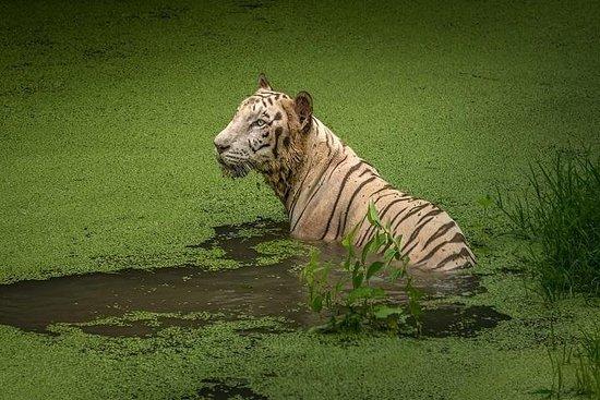 Tour privado: tour de 4 días a Sundarbans desde Kolkata