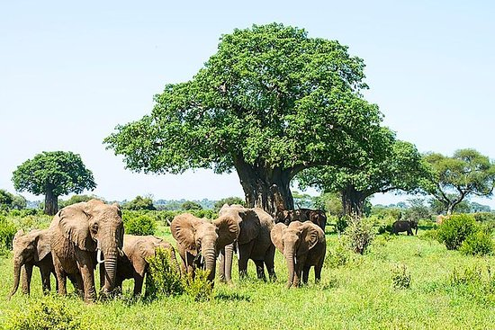 4 dagar, 3 nätter Safari, Tarangire ...