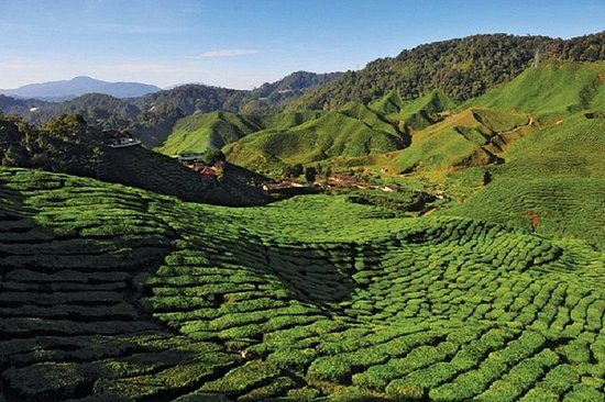 2-netter Cameron Highlands Discovery fra Penang til Kuala Lumpur