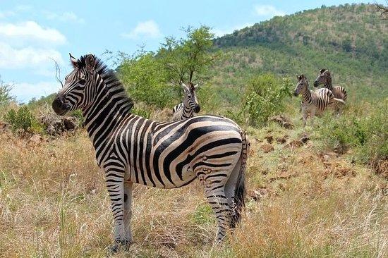 Фотография Pillanesburg National Park 2 Days 1 night Magical Safari