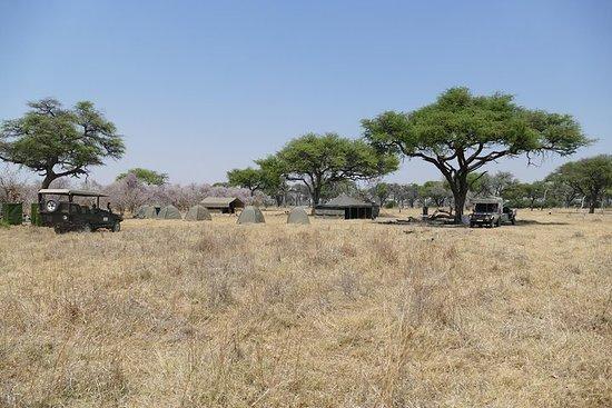 Wild Africa Safaris Prächtige Mobile...
