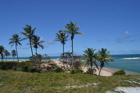 Beaches North Coast 2 tours with overnight hotel Coconut Coast...