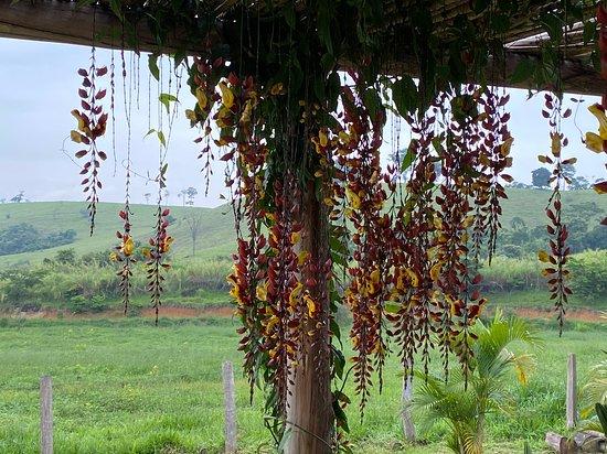 Fazenda Santa Vitória. Local tranquilo para descanso
