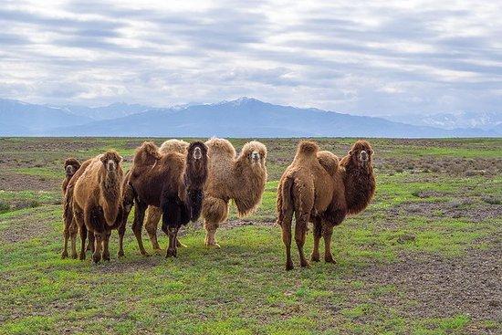 La route de la soie au Kazakhstan