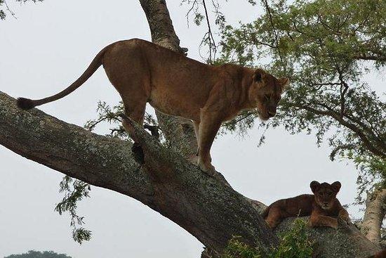 Safari in Uganda nel Parco Nazionale