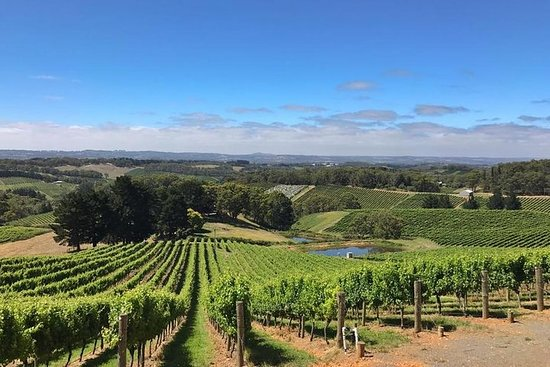 Small-Group Full-Day Adelaide Hills and Hahndorf Wine Tour from...