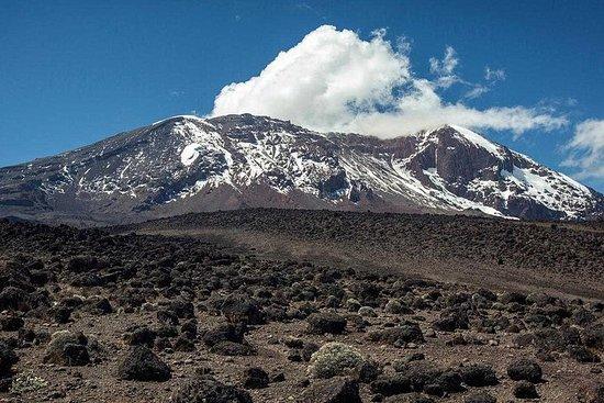 Mount Kilimanjaro, 9 Days Northern Circuit Route. Resmi