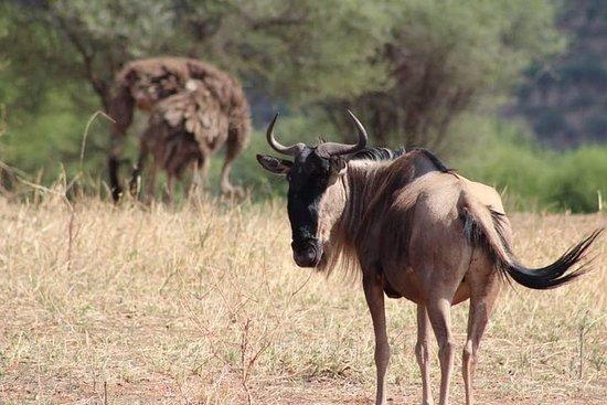 3 jours Ngorongoro Serengeti Meilleur...