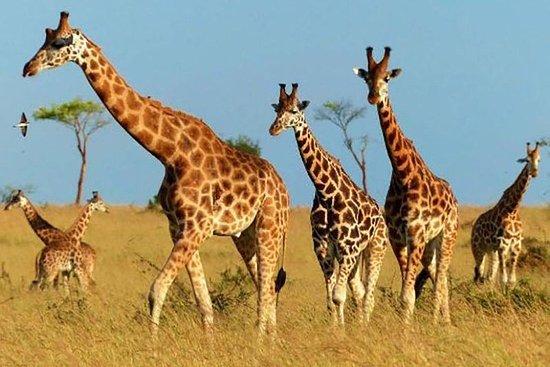 Kidepo National Park, Oeganda ...