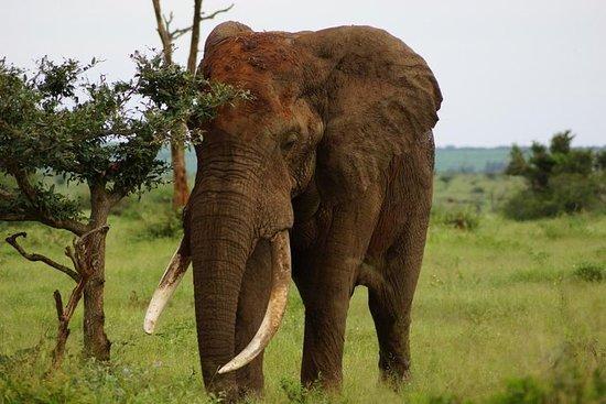 Safari de 2 dias no Parque Kruger...