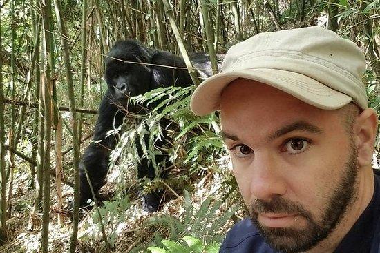 Expérience de randonnée au Gorilla au...
