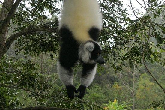 Madagascar Wildlife Tour pour 02 jours