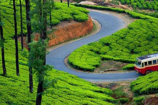 Luxurious ( 4 Star) Kerala Tour Package - 11 Days
