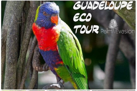 Guadalupe Eco Tour